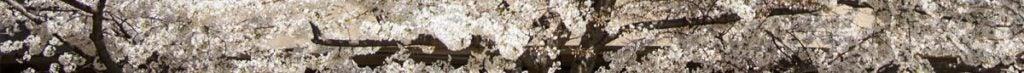 close up image of a rock