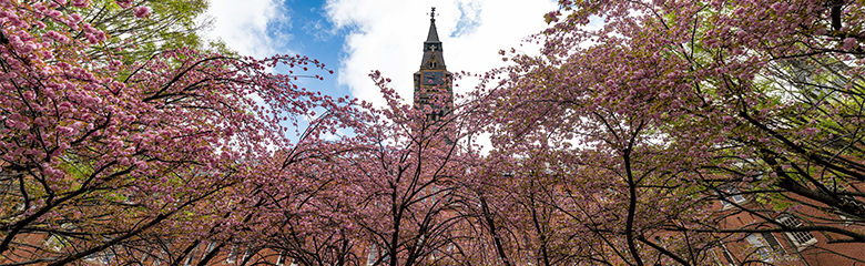 Healy Hall framed by cherry blooms